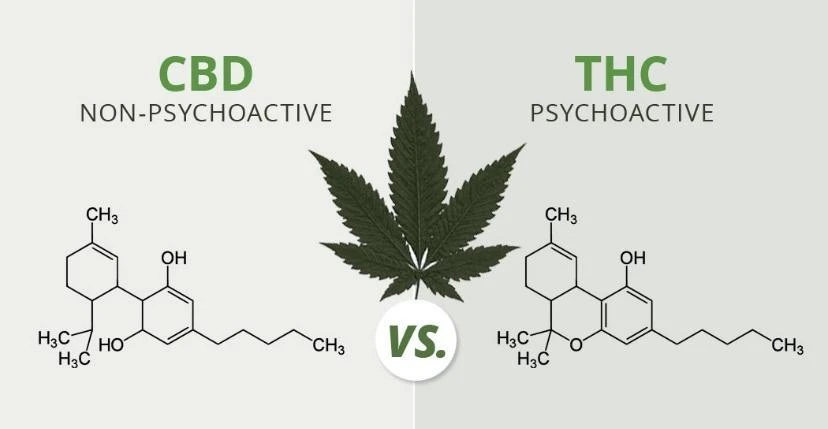 What Are the Differences between THC and CBD Edibles?