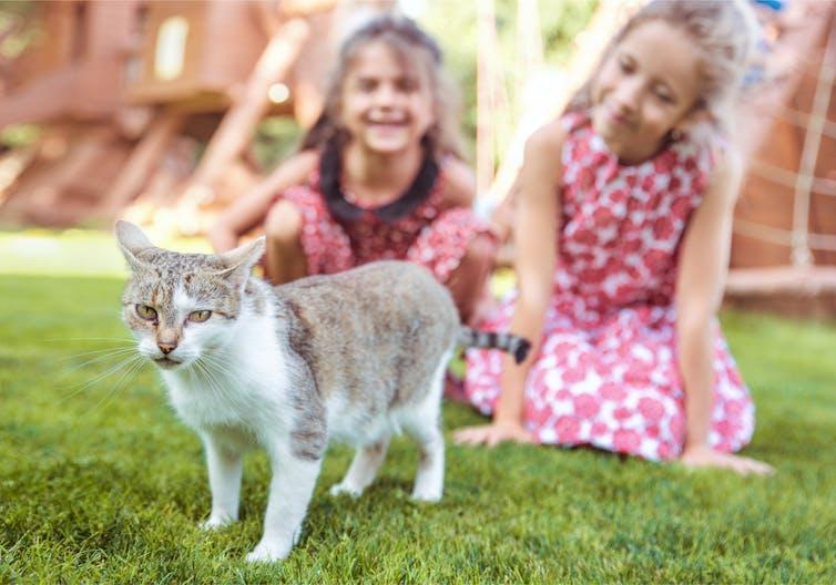 Science Behind Why People Love Pets