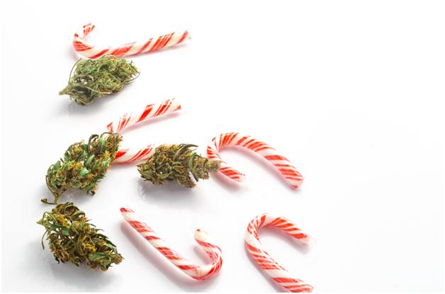 Tips to Maximize candy cane auto flower growth time.